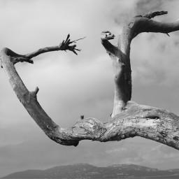 blackandwhite nature minimalist tree