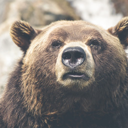 FreeToEdit wild animal animals bear