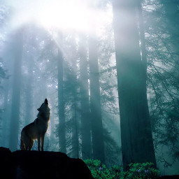 cant wolfhowling wolf