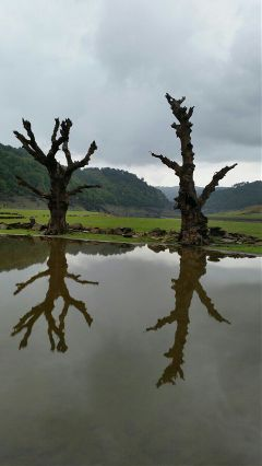 wppnature reflection trees water clouds