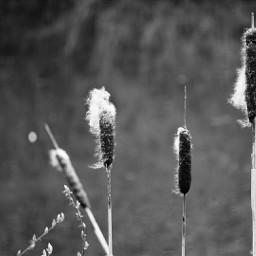 nature spring blackandwhite