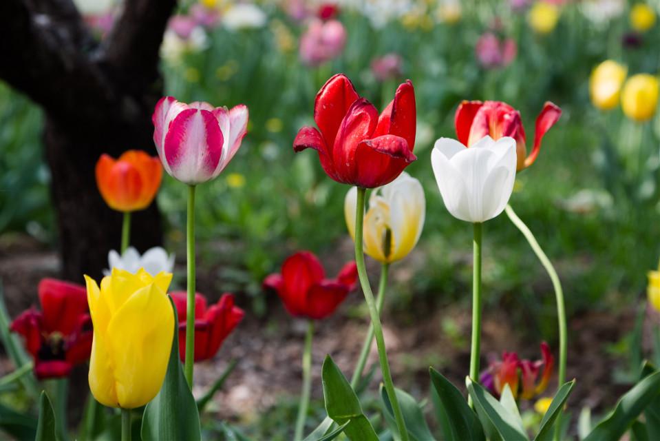 Tuplit  #bokeh #flower #emotions #cute #nature #photography #spring #garden #Beijing Botanical Garden