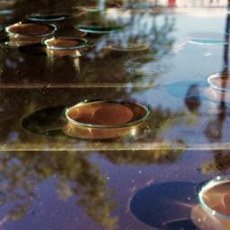raindrops pine reflection tree shadows