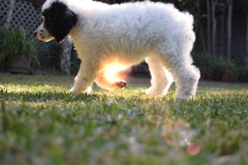 lensflare feature paphotochallenge interesting dog