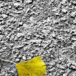 freetoedit otoño oto